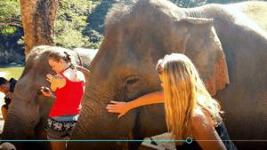 Elephant Refuge Chiang Mai Thailand